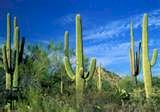 Saguaro National Park Tucson